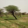 afforetation-Dori-Burkina Faso